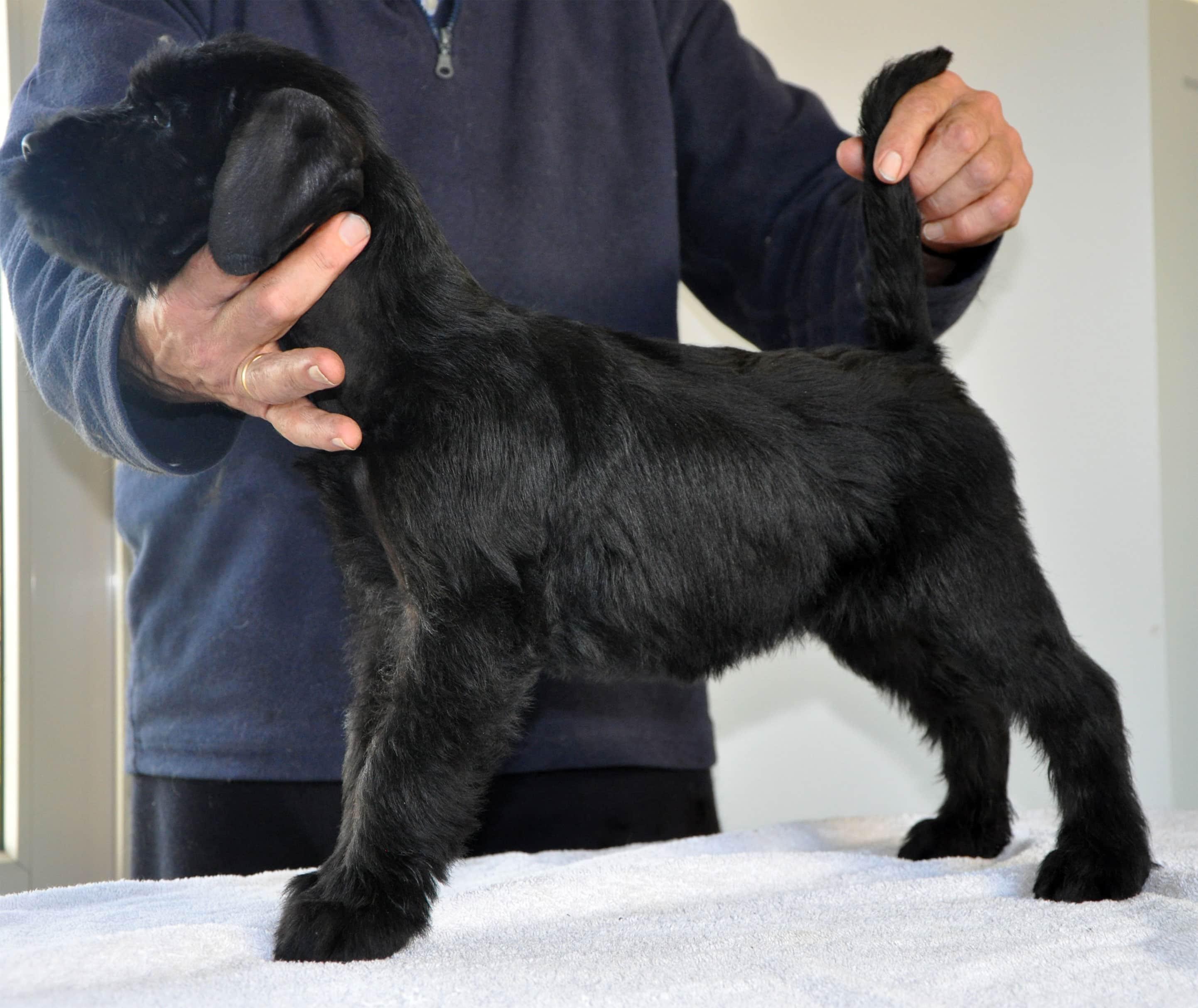 Pup Dea&Bodo-13