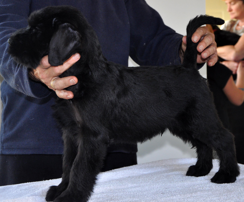 Pup Dea&Bodo-15