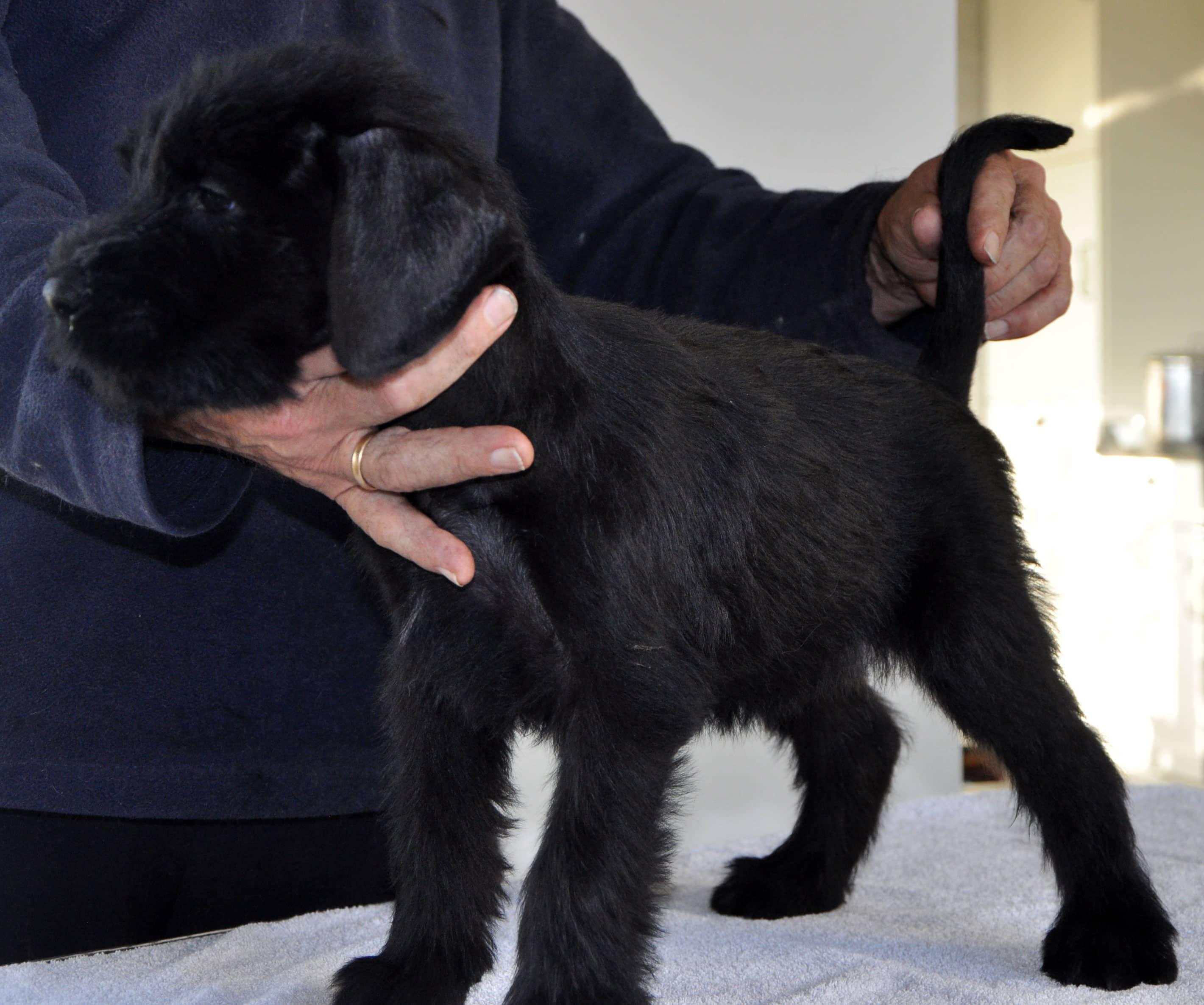 Pup Dea&Bodo-2