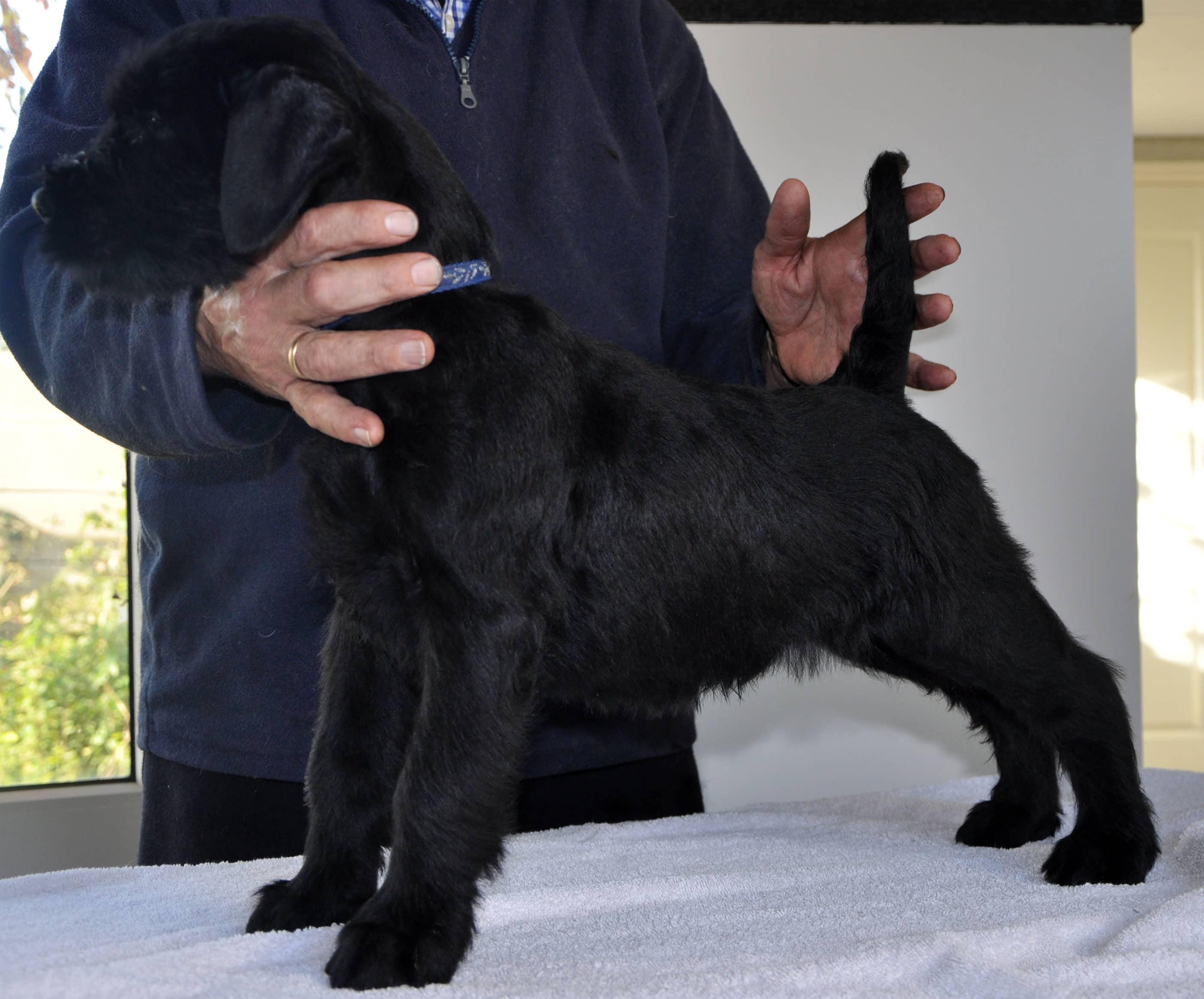 Pup Dea&Bodo-5